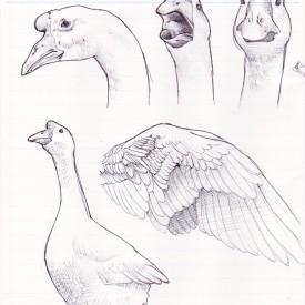 edoma06-sketch-001